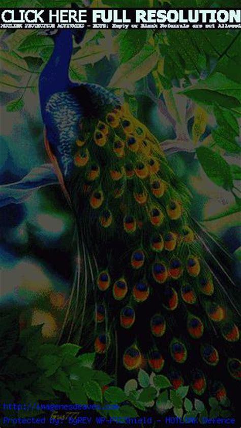 Imagenes de Aves — Imagenes Gif Animadas de Hermosos Pavos ...