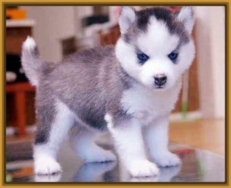 Imagenes de Cachorros Hermosos y tiernos | Imagenes de ...