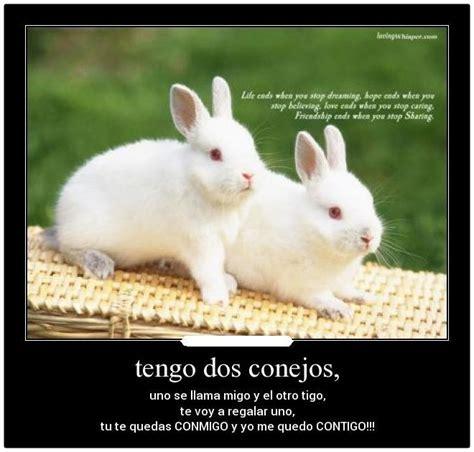 imagenes de conejos enamorados con frases Archivos ...