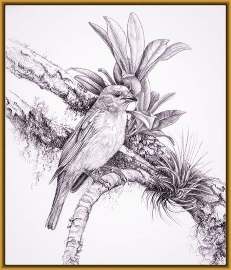 Imagenes de Dibujos de Aves para pintar   Imagenes de Pajaros