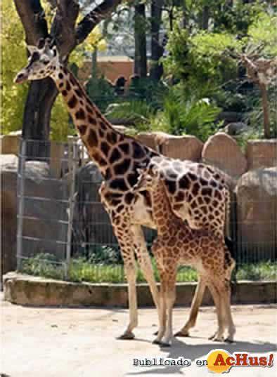Imagenes de España > Zoo de Barcelona