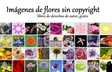 Imágenes de flores libres de derechos de autor