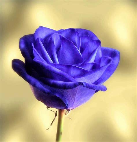 Imagenes De Flores Para Enamorar Y Poner Como Perfil ...