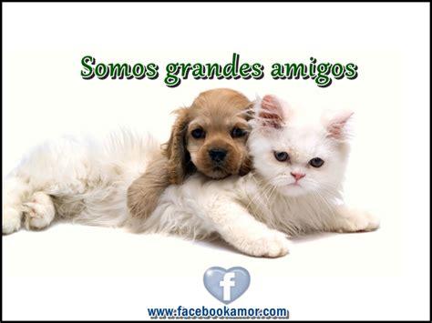 Imágenes de Gatitos con frases cortas Bonitas para ...