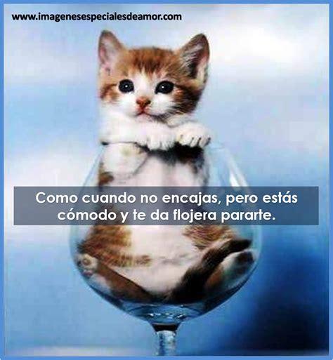 imagenes de gatos tiernos con frases graciosas – Imagenes ...