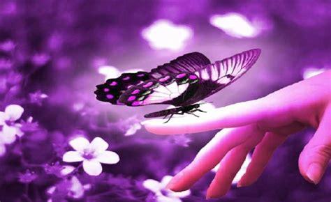 Imágenes de mariposas con movimiento - Imagui