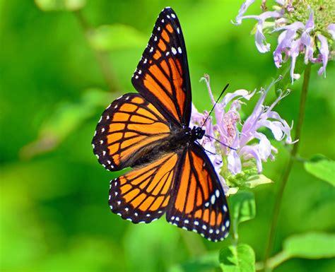 Imágenes de mariposas | Imágenes chidas