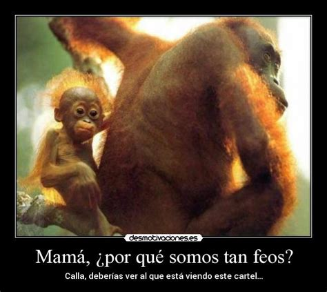 imagenes de monos chistosas imagui Quotes