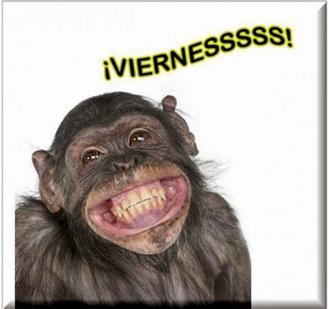 Imagenes De Monos Con Frases Chistosas | Imagenes De ...