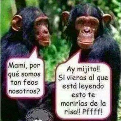 imagenes de monos graciosos con frases chistosas | frases ...