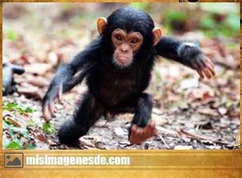 Imágenes de monos graciosos | Imágenes