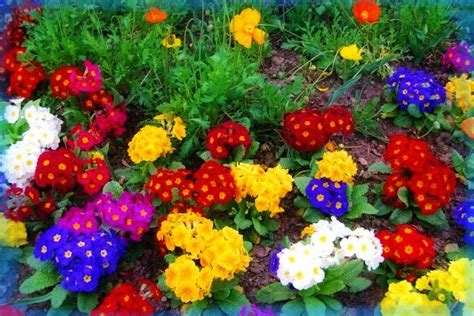 Imágenes de Paisajes de la Primavera para Fondo de ...