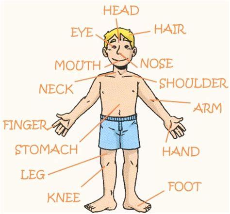 Imágenes de partes del cuerpo en ingles y español ...