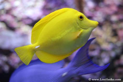 Imagenes De Peces De Colores Pictures to Pin on Pinterest ...