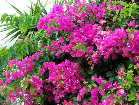 Imagenes De Plantas Con Flores   Imagenes De Paisajes Y ...