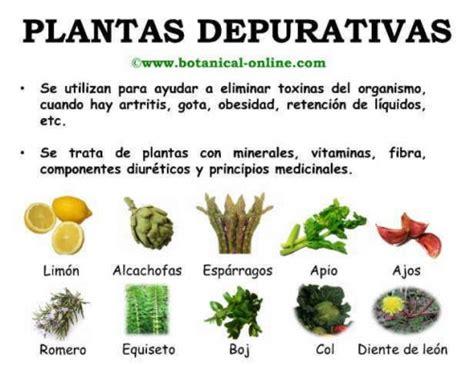 Imágenes de plantas medicinales para descargar
