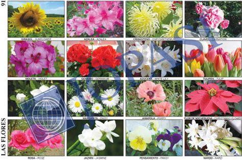 Imagenes de plantas ornamentales y sus nombres   Imagui