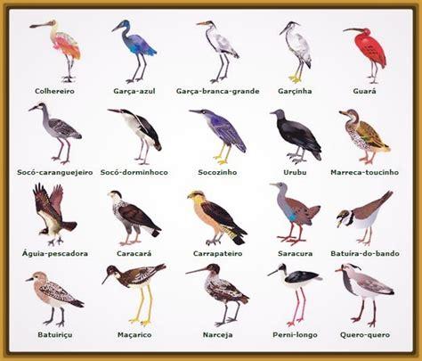 Imagenes de Todas las Aves del Mundo para colorear