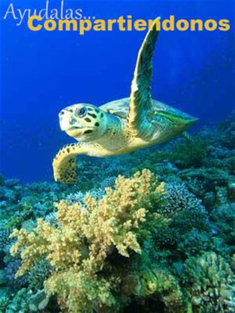 Imágenes de tortugas marinas » TORTUGAMARINAPEDIA
