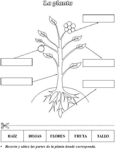 Imagenes del crecimiento de una planta para colorear   Imagui