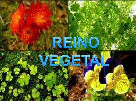 Imagenes del reino vegetal - Imagui