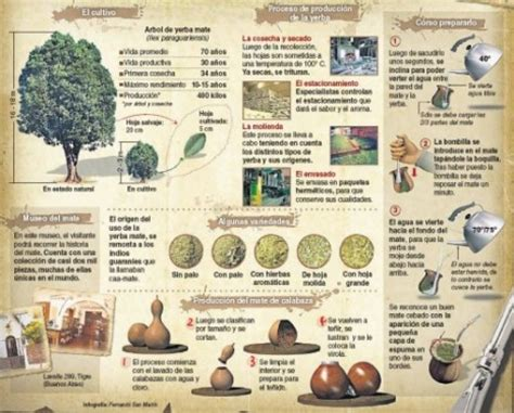 Imágenes e infografías del mate, bebida nacional Argentina ...
