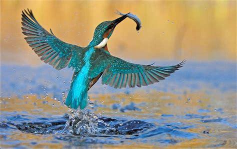 Imágenes espectaculares de la Naturaleza  3 : mundo animal ...