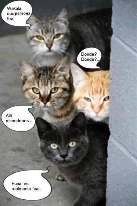 Imagenes Gif De Gatos Para Descargar