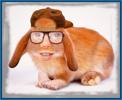 Imagenes Graciosas De Conejos Divertidos   Imagenes de ...