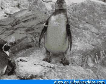 Imágenes Graciosas Gifs graciosos tumblr: Susto animal ...