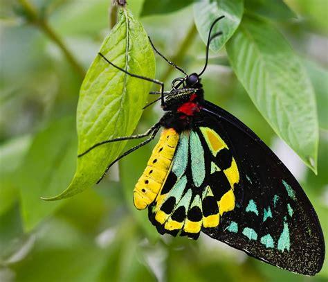 Imágenes HD de mariposas :: Imágenes y fotos