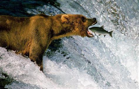 Imágenes impresionantes de animales (3)