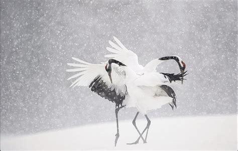 Imágenes impresionantes de animales (5)
