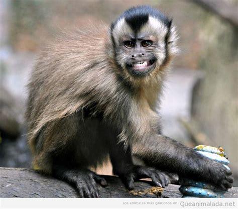 Imagenes monos graciosos - Imagui