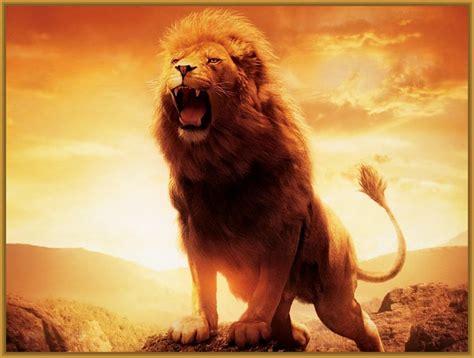 imagenes para fondo de pantalla de leones Archivos ...