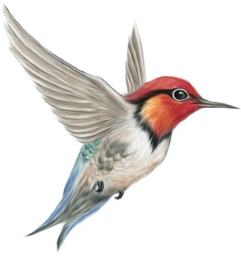 Imagens fundo transparente pássaros | Imagens para photoshop