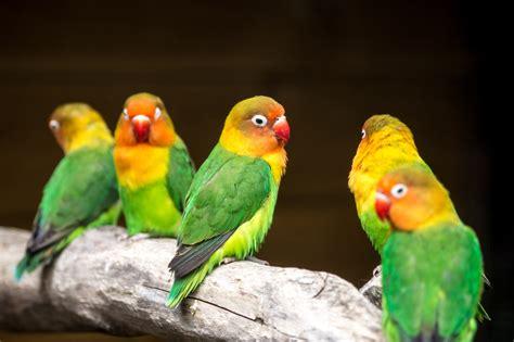 Images Gratuites : oiseau, le bec, Couleur, Coloré, jaune ...