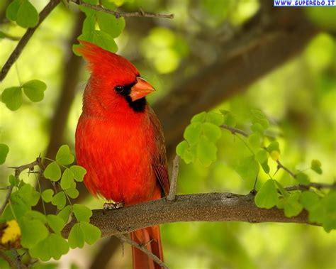 Immagini Uccelli • 91 Immagini in alta definizione (HD)