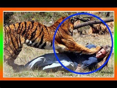 Impactantes Animales Salvajes Escapando de la Caza - YouTube