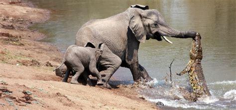 ¡Impactantes peleas de animales!_Spanish.china.org.cn_中国最 ...