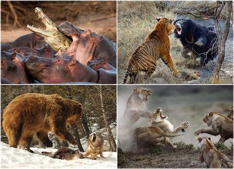 ¡Impactantes peleas de animales! - Taringa!