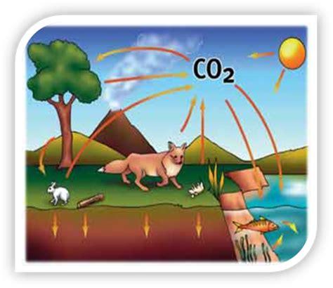 Importancia Del Carbono Para La Vida - Circuit Diagram Maker