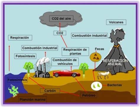 Importancia del Ciclo del Carbono