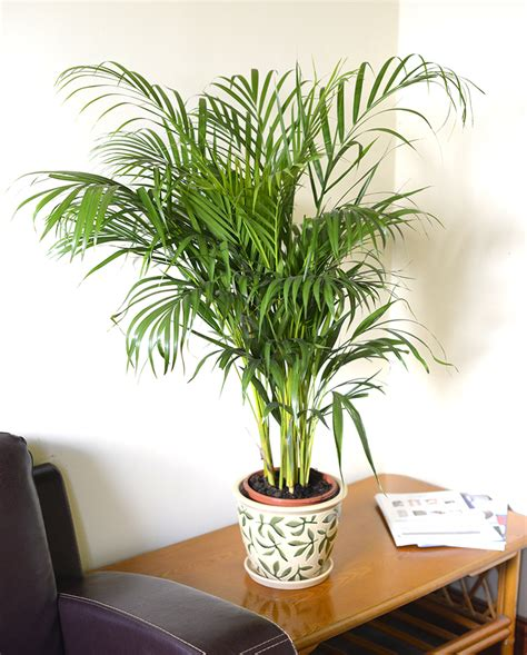 Indoor Plants Images – Modern House