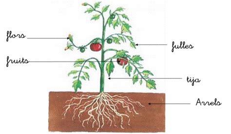 INFANTIL SAN AGUSTÍN PALMA 2013/14: les plantes