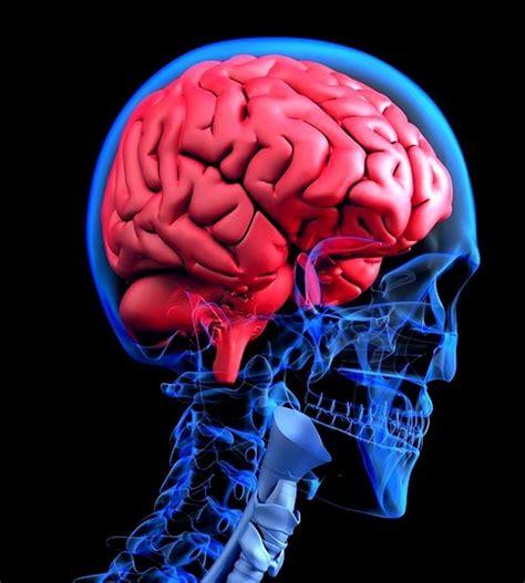 Inflamación del cerebro: síntomas, causas, consecuencias y más