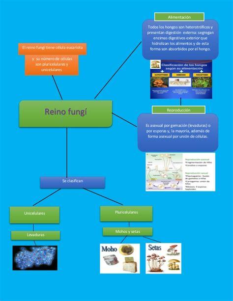 infografia del reino fungi