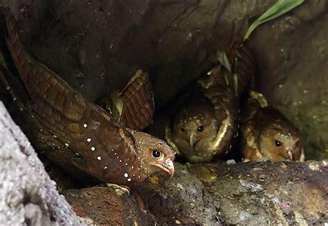 Información - Cueva de los Tayos - San Juan Bosco
