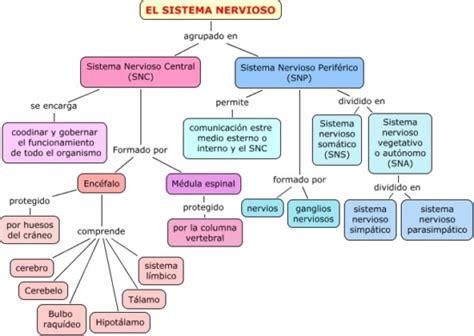 Información de diferencia entre Sistema Nervioso Central y ...