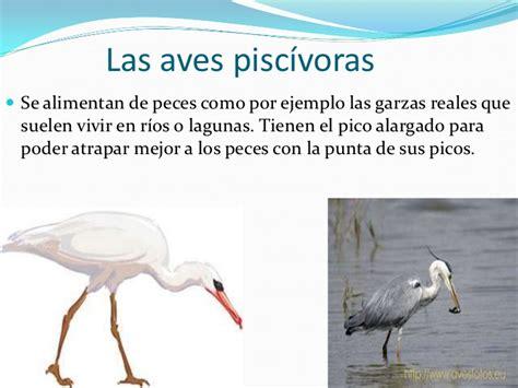 Información de los picos de las aves